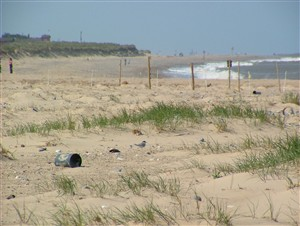 Photo:Spot the terns on North Denes beach!