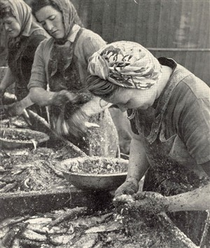 Photo:Fisher girls gutting the fish on the Quayside